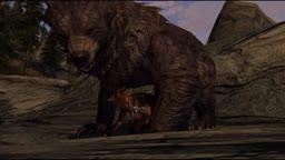 Khajiiti Bear Breeder - Arkona