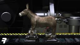 Donkey Factory - Rangarig